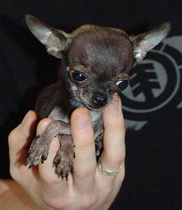 10 of the Smallest Animals In The World