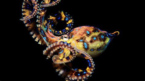 Hd Octopus Wallpapers Pixelstalknet