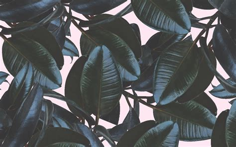 aesthetic laptop daun wallpapers