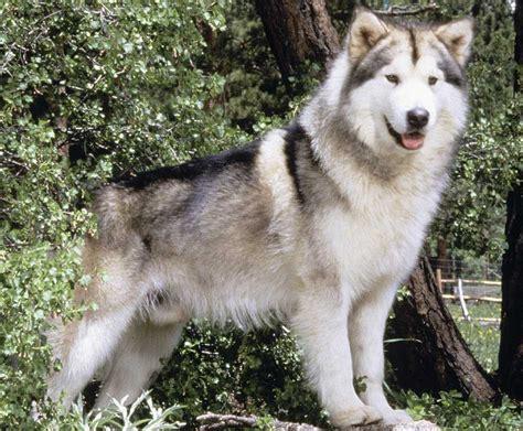 Most Dangerous Dog Breeds In The World Top Ten List