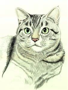 How to Draw Realistic Cat Drawing
