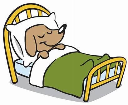 Sleeping Dog Tunesday Timeless Credit