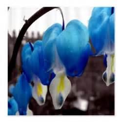 Blue Bleeding Heart Flower