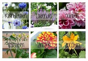 schutze die bienen mit diesen 3 einfachen schritten With französischer balkon mit bienenfreundliche pflanzen für balkon und garten