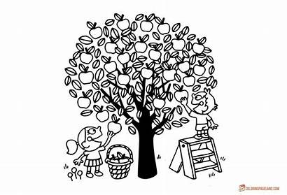 Apple Coloring Tree Pages Printable Picking Apples