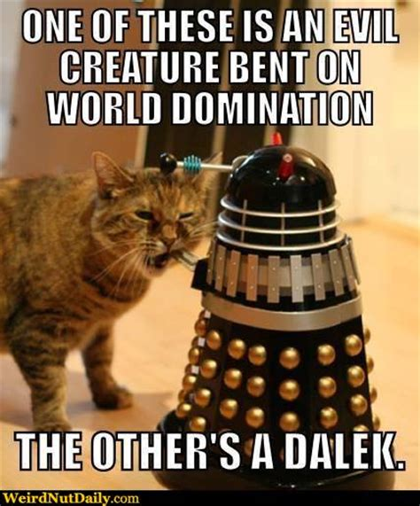 Doctor Who Cat Meme - funny pictures weirdnutdaily cat more evil than a dalek