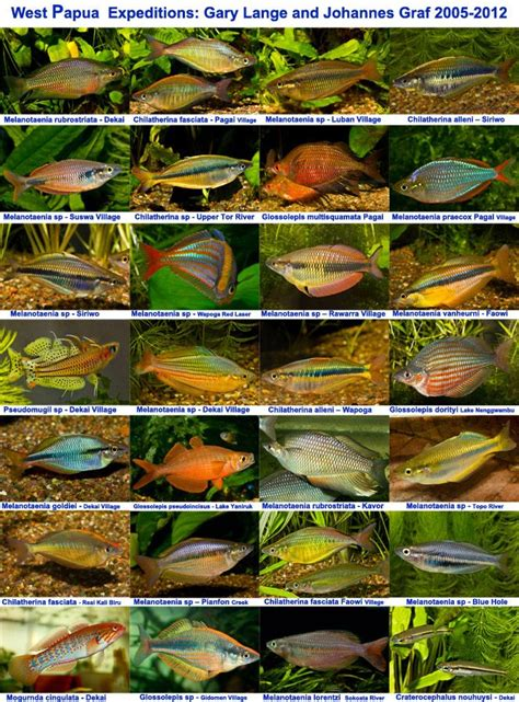 images  fish species  pinterest cichlids