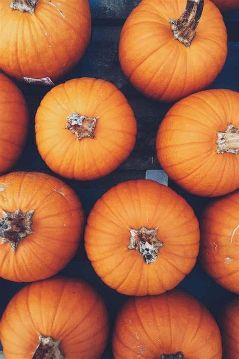 Vsco Fall Backgrounds For Laptop by Pumpkins Autumn Fall Feels Fall Vibes All Things