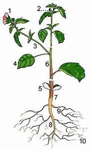 Aufbau Einer Blume : aufgabe 1 aufbau einer pflanze bio1200 39 s blog ~ Whattoseeinmadrid.com Haus und Dekorationen