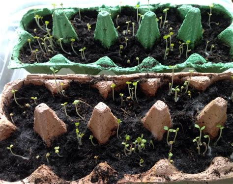 die besten 25 kartoffeln pflanzen ideen auf wie kartoffeln anbaut