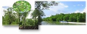 Ekosistem Mangrove  Faktor