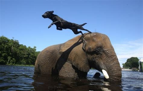 dog  elephant   friends life  dogs