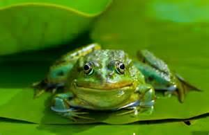 webshop design frosch triviart