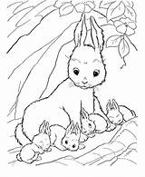Bunny Coloring Rabbit Pages Bunnies Drawing Printable Clipart Carrot Colouring Rabbits Animal Mother Sheets Cartoon Animals Easter Jessica Library Getdrawings sketch template
