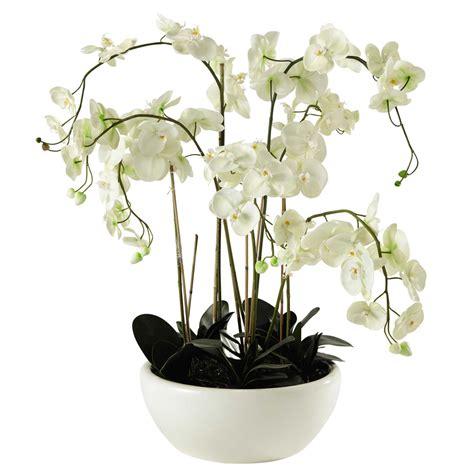 entretien des orchidees en pot 28 images rempoter une orchid 233 e techniques et conseils