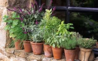 from coriander to mint a guide to growing herbs the
