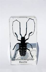 Insects In Lucite