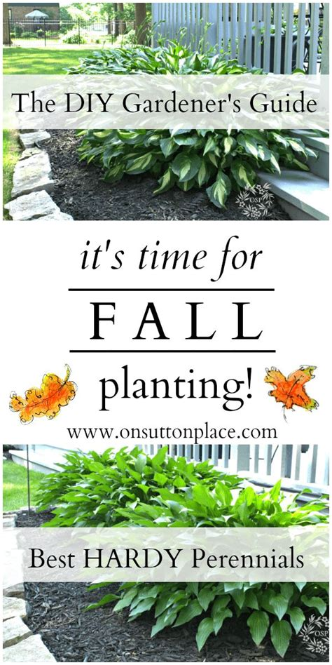 1000 ideas about fall planting guide on