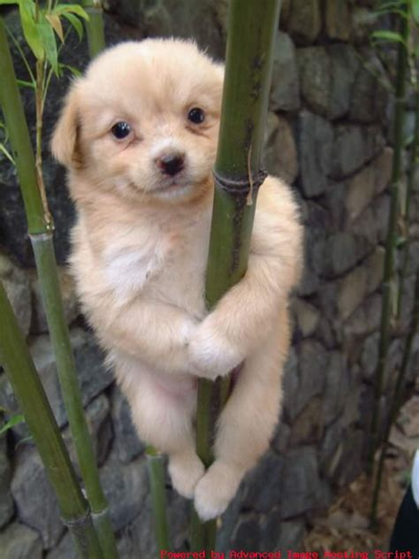 cute baby dog pictures