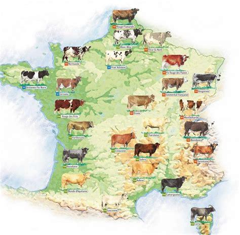 affaire de bureau la carte de des races bovines