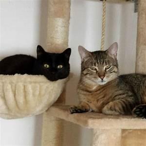 Was Brauchen Katzen : grundausstattung f r katzen katzenschutz bonn rhein sieg ev ~ Lizthompson.info Haus und Dekorationen