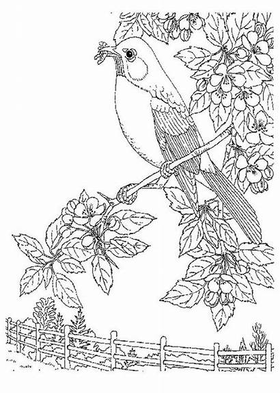 Nature Coloring Pages Bird Eat Worm Coloring4free
