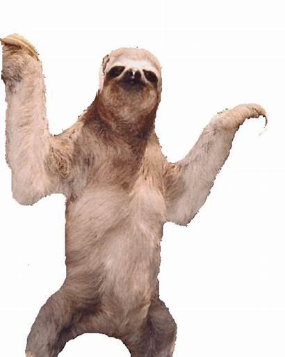 Sloth Sloths Bye Many Animals
