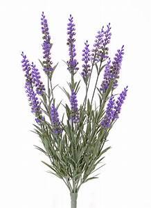 Wetterfeste Kunstpflanzen Balkon : lavendel k nstlich pflanzen f r nassen boden ~ Michelbontemps.com Haus und Dekorationen