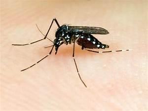 Was Tun Gegen Mücken Im Zimmer : m cken was tun gegen die plagegeister m cken ~ Lizthompson.info Haus und Dekorationen
