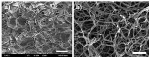 Hydrogel Structures Observed By Fesem  Field Emission Scanning Electron