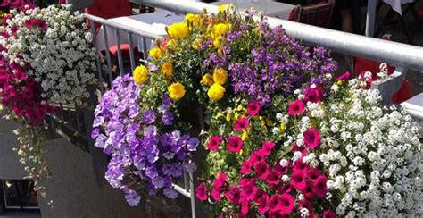 balkonpflanzen sonnig pflegeleicht beste balkonpflanzen 2015 bilder
