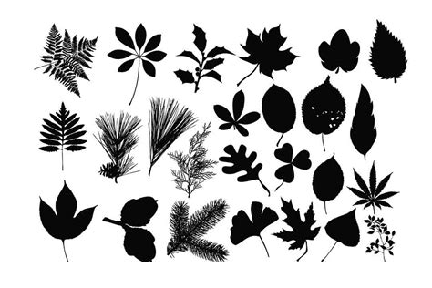Leaves Silhouette Svg Graphic By Retrowalldecor