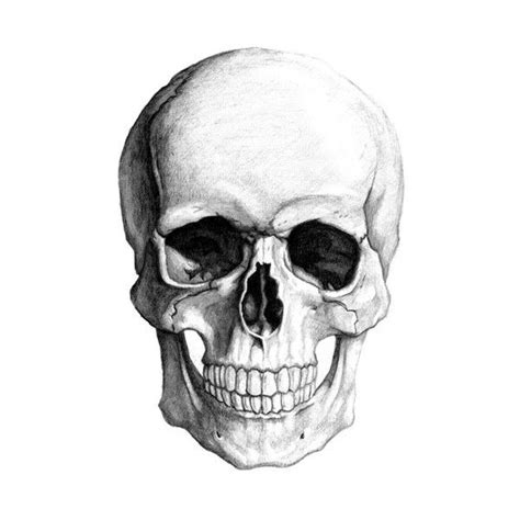 How Draw Realistic Skull Pirate Liked