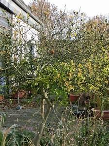 Pflanzen Für Den Vorgarten : winterharte pflanzen f r den vorgarten vorschl ge seite ~ Michelbontemps.com Haus und Dekorationen
