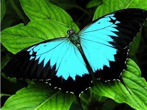 The Six Most Beautiful Butterflies In The World