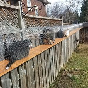 diy cat enclosure another awesome outdoor cat enclosure cuckoo4design