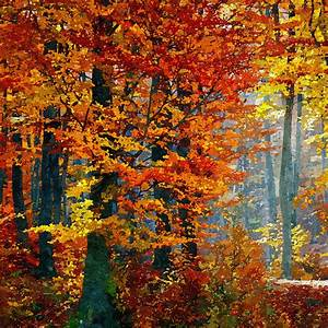 Forest Painting Autumn Trees Free Stock Photo - Public ...