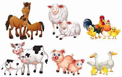 Farm Animal Vector Animals Realistic Colorful Graphics