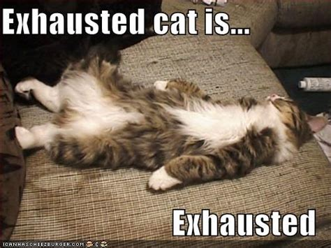 Exhausted Meme - the effects of stress on training everybody s kung fu fighting