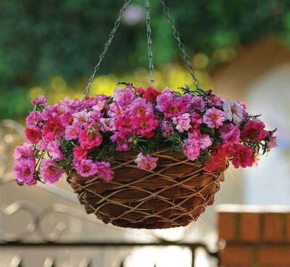 tanaman gantung tahan panas mempercantik