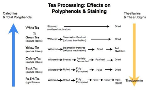 Which Type of Tea Stains Teeth the Most   Tea Processing & Stained Teeth