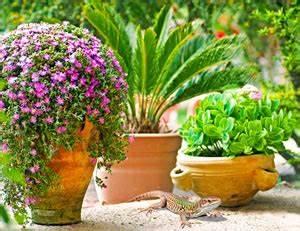 Schmucklilie überwintern Gelbe Blätter : yucca palme palmlilie bekommt gelbe bl tter was tun ~ Eleganceandgraceweddings.com Haus und Dekorationen