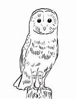 Owl Coloring Barn Printable Owls Sheet Adult Template Samanthasbell Sketch sketch template