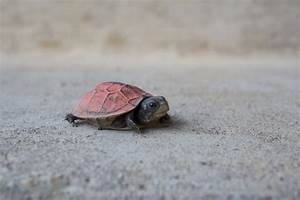 Cutest Turtle In The World | www.imgkid.com - The Image ...