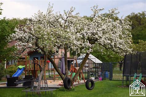 Baeume Im Garten Zierde Und Schattenspender by Wir Pflanzen Einen Baum Aber Welchen Wirgartenkinder