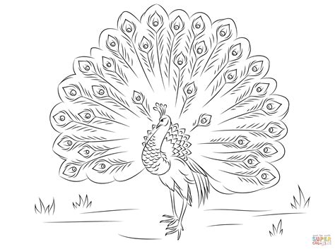 Beautiful Peacock Coloring Page Free Printable Coloring