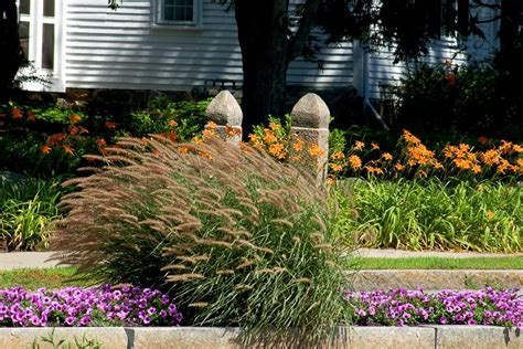 border grasses for landscaping flower borders ideas to make your landscaping sizzle