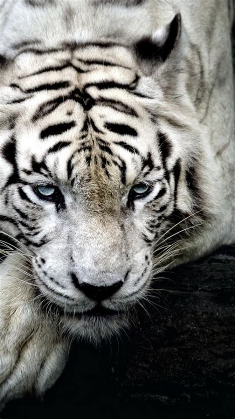 animal wallpapers hd android apps  google play