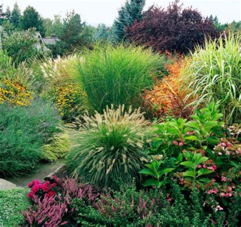 midwest gardens how to use ornamental grasses in midwest gardens midwest living