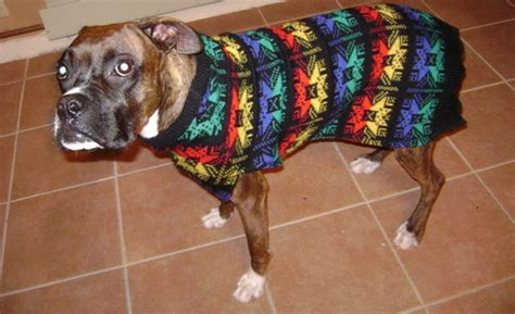 sweaters for boxer dogs best products for boxer
